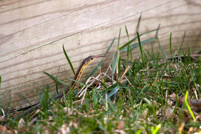 Las mejores opciones de repelente de serpientes
