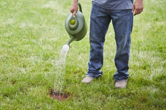 La mejor opción de semilla de hierba de festuca alta