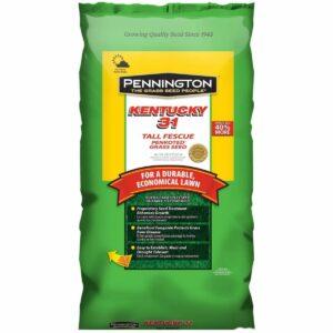La mejor opción de semilla de hierba de festuca alta: Pennington Kentucky 31 Semilla de hierba de festuca alta