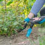 Las mejores opciones de fertilizantes de rosas para el jardín
