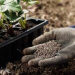 Las mejores opciones de fertilizantes orgánicos
